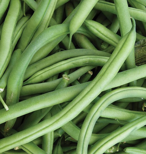 Organically Grown Bush Beans - 500 Gms