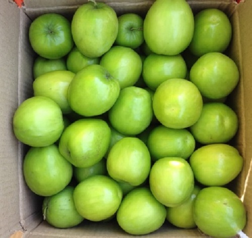 Naturally Grown Apple Ber - 1 Kg