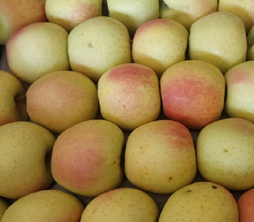 Naturally Grown Golden Delicious Apple From Kashmir